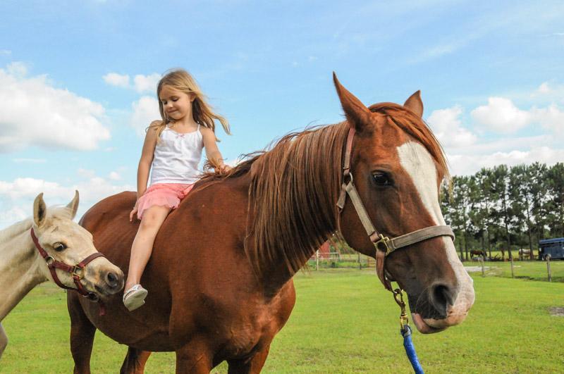 horsefarm05