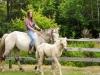 horsefarm08