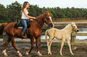 Horseback riding near Wilmington